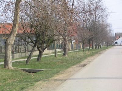 utcak1 20080219 1117444564