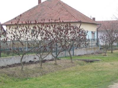 utcak4 20080219 1641444781